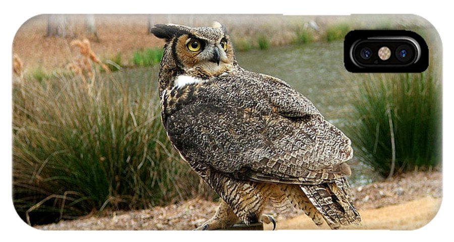 Wildlife IPhone X Case featuring the photograph Great Horned Owl 1 by Robert Meanor