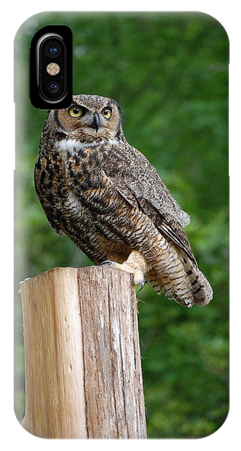 Raptor IPhone X Case featuring the photograph Great Horned Owl by Robert Meanor