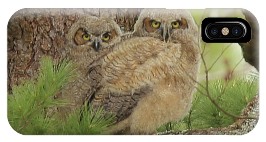 Great IPhone X / XS Case featuring the photograph Great Horned Owlets by Laurie Pocher
