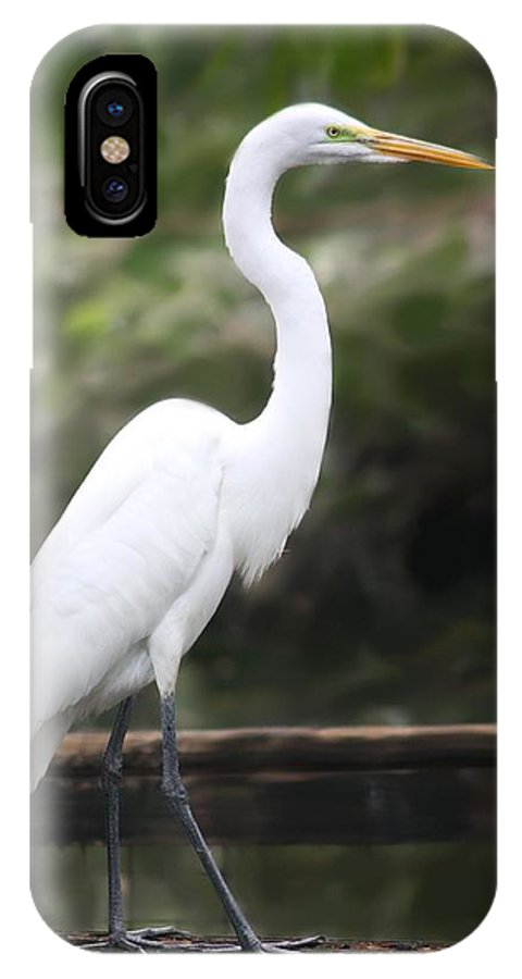 Great White Egret IPhone X Case featuring the photograph Great White Egret by Diane Merkle