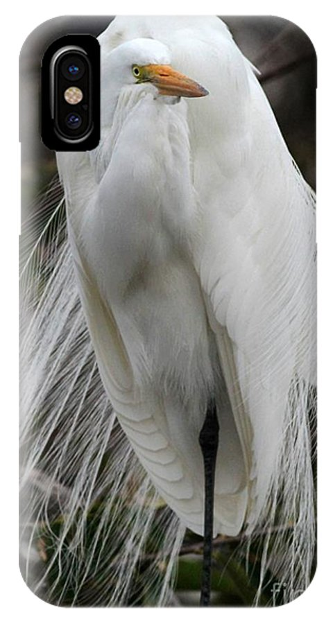 Bird IPhone X Case featuring the photograph Great White Egret Windblown by Sabrina L Ryan