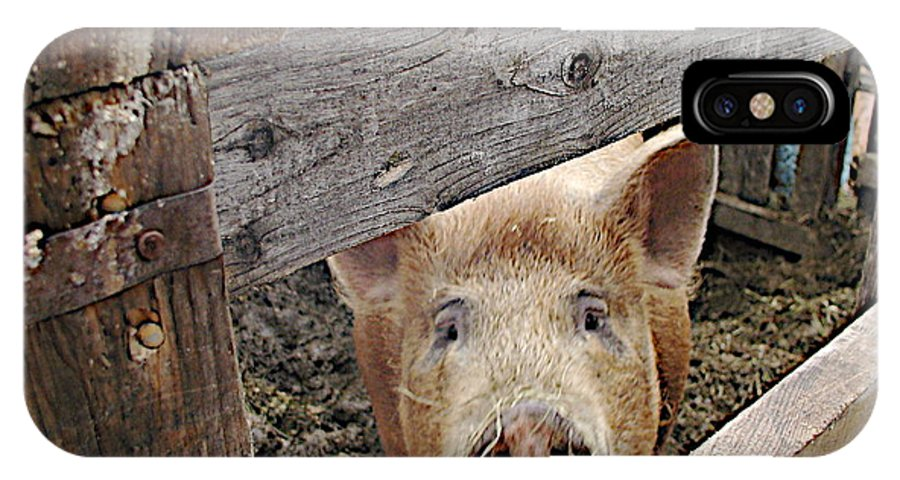 Barnpig IPhone Case featuring the photograph Green Acres by Faith Harron Boudreau