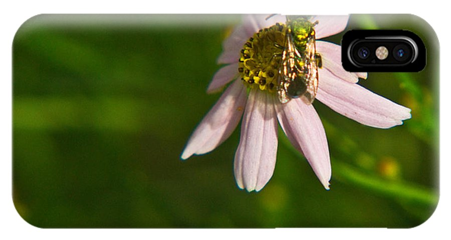 Green IPhone X Case featuring the photograph Green Bee Searches For Pollen by Douglas Barnett
