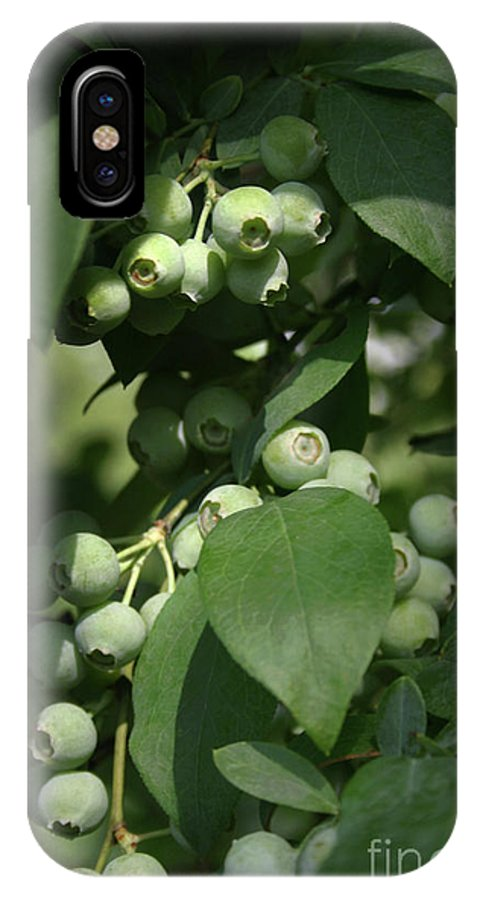 Blueberry IPhone X Case featuring the photograph Green Before Blue by Kim Henderson