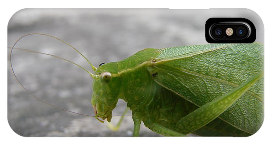 Bugs IPhone X Case featuring the photograph Green Bug by Mary Halpin