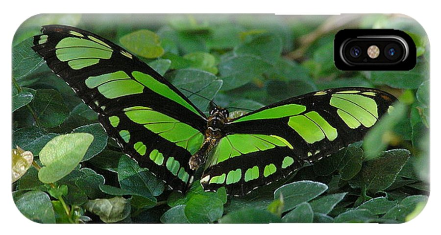 Green IPhone X Case featuring the photograph Green Butterfly by Louise Magno