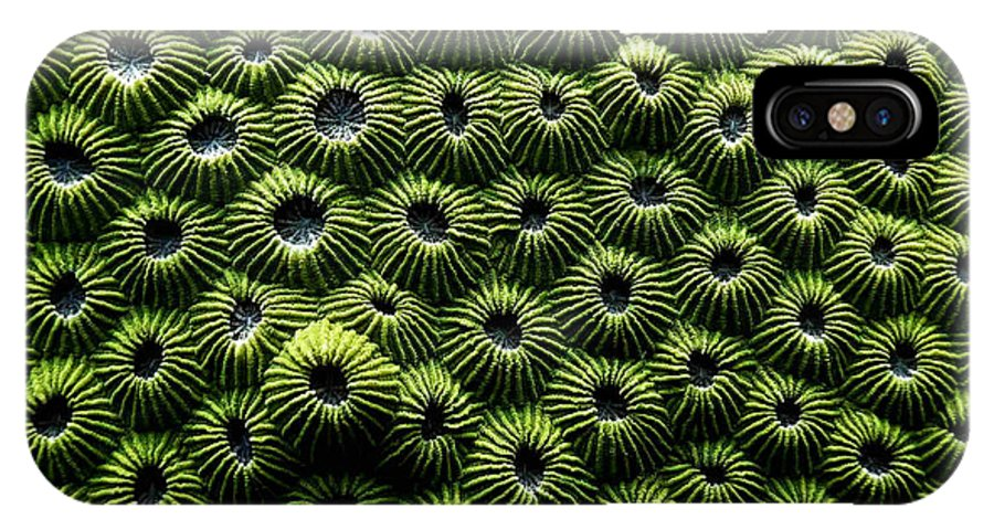 Coral IPhone X Case featuring the photograph Green Coral by Dragica Micki Fortuna