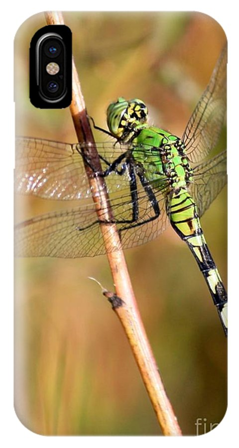Dragonfly IPhone X Case featuring the photograph Green Dragonfly Closeup by Carol Groenen