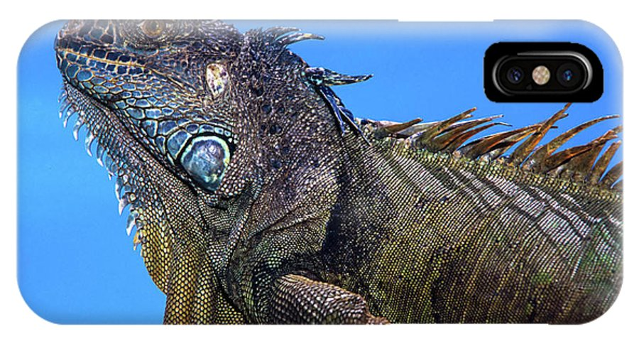 Landscape IPhone X Case featuring the pyrography Green Iguana by Javier Flores