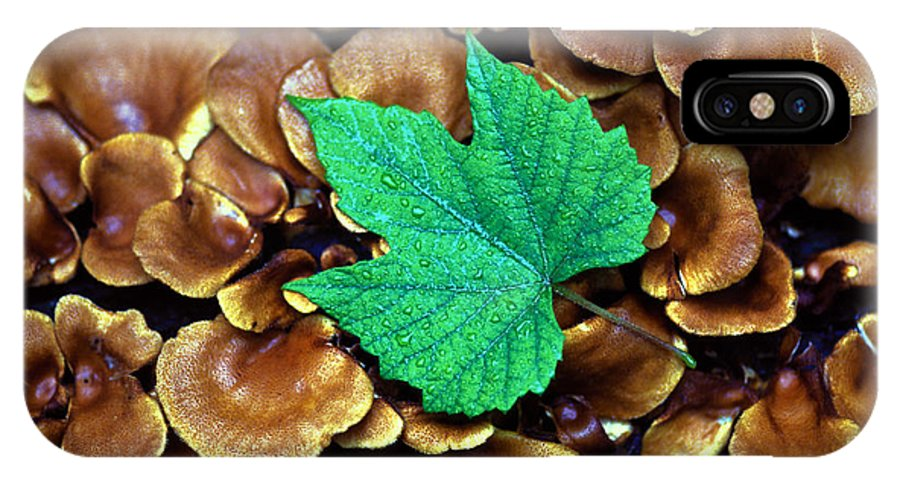 Nature IPhone X Case featuring the photograph Green Leaf On Fungus by Carl Purcell