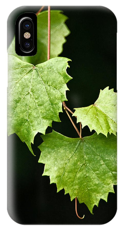 Flora IPhone X Case featuring the photograph Green Leaves by Christopher Holmes