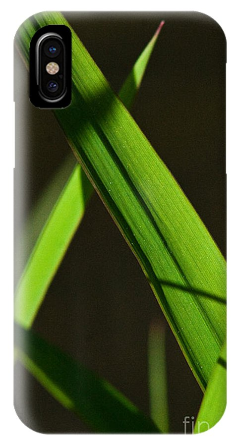 Green IPhone X Case featuring the photograph Green Leaves In Sunlight by Martha Johnson