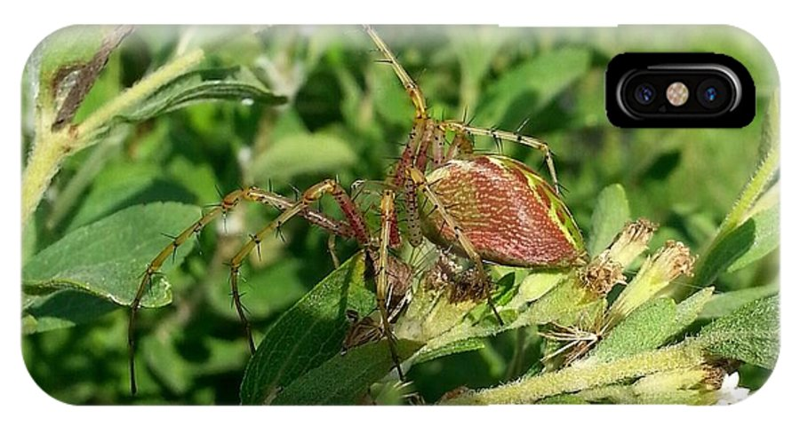Spider IPhone X Case featuring the photograph Green Lynx Spider by Amanda Myers