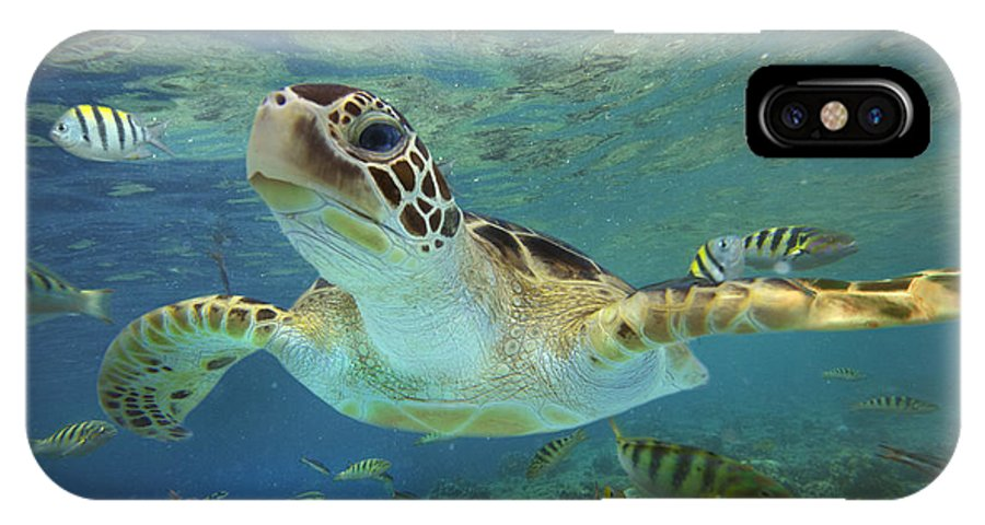 Mp IPhone X Case featuring the photograph Green Sea Turtle Chelonia Mydas by Tim Fitzharris