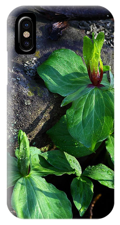 Green Trillium IPhone X Case featuring the photograph Green Trillium at Sunrise by Michael Dougherty