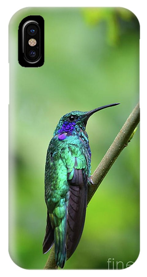 Hummingbird IPhone X Case featuring the photograph Green Violet Ear Hummingbird by Leia Hewitt
