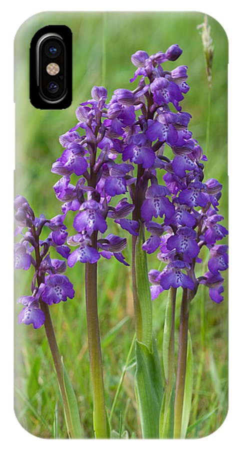 Orchid.flower IPhone X Case featuring the photograph Green-winged Orchids by Bob Kemp