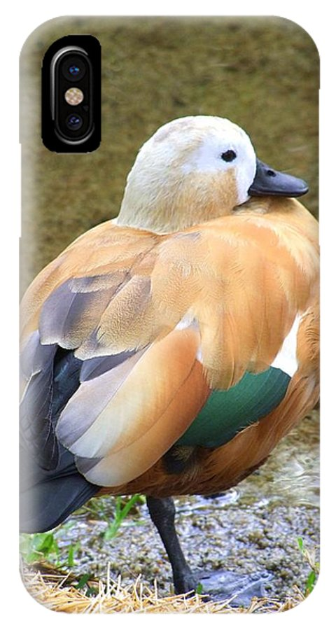 Green IPhone X Case featuring the photograph Green Winged Wood Duck 2 by Mary Deal