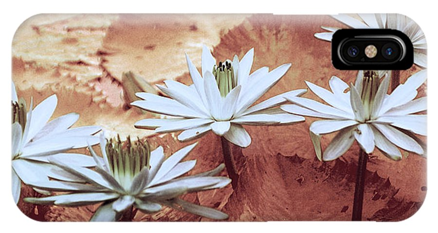 Flowers IPhone X Case featuring the photograph Greeting The Day by Holly Kempe