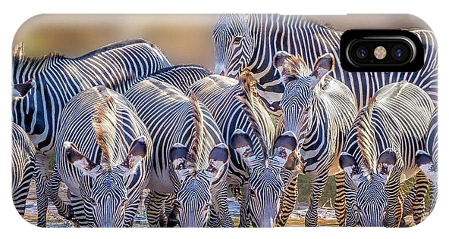 Africa IPhone X Case featuring the photograph Grevy Zebra Party 7528 by Karen Celella