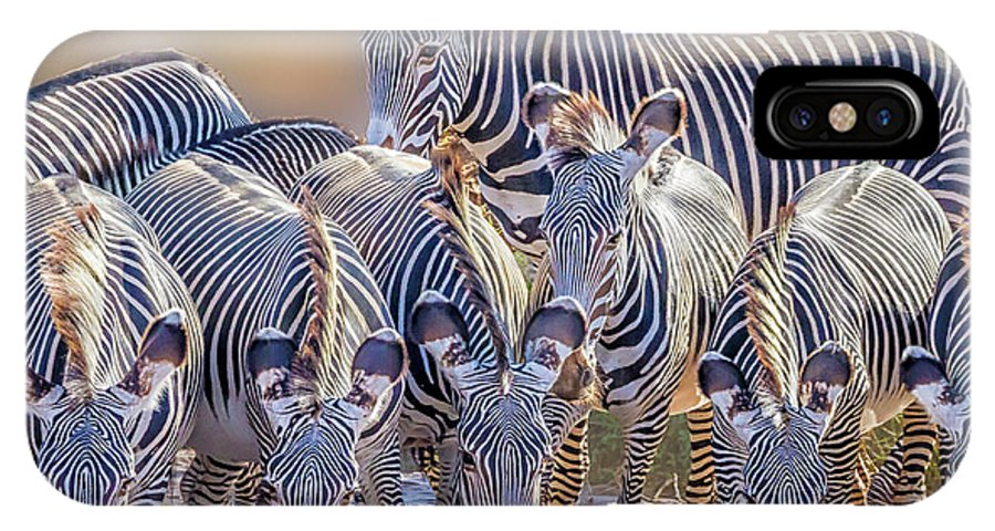 Africa IPhone X Case featuring the photograph Grevy Zebra Party 7528c by Karen Celella
