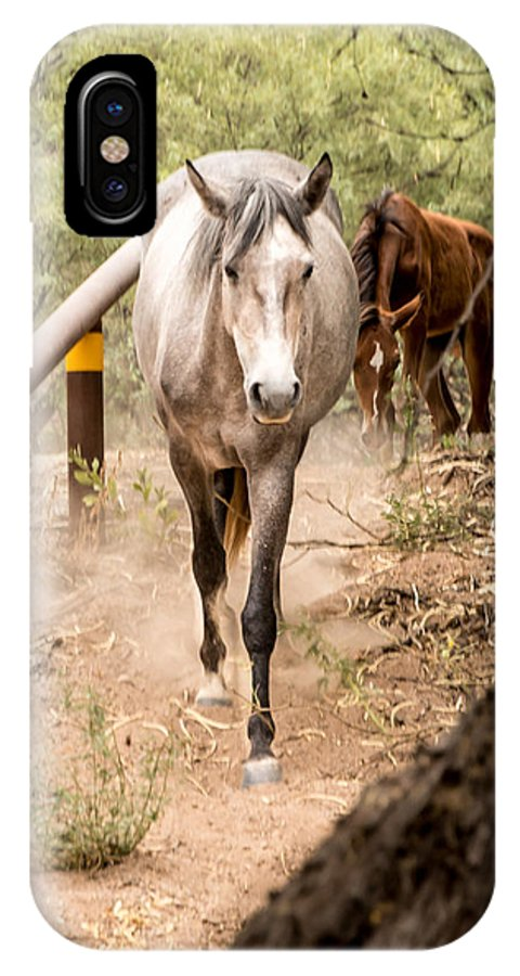 Horse IPhone X / XS Case featuring the photograph Grey Horse by Sandy Klewicki