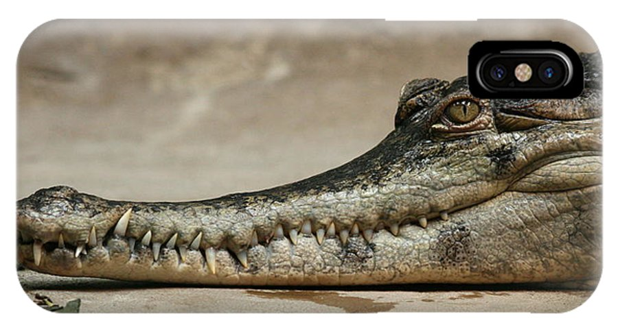 Gator IPhone X Case featuring the photograph Grin And Bare It by David Dunham