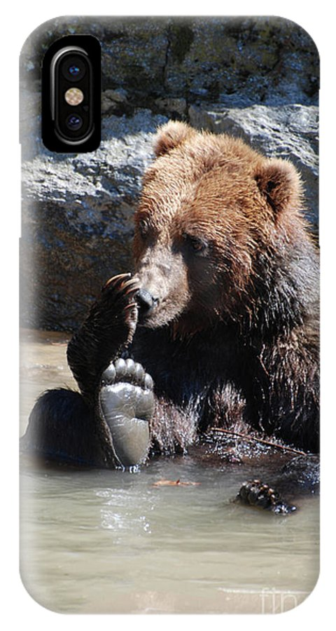 Grizzly IPhone X Case featuring the photograph Grizzly Bear Licking His Paw While Seated In A Muddy River by DejaVu Designs