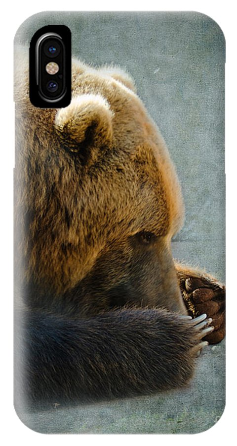Bear IPhone X Case featuring the photograph Grizzly Bear Lying Down by Betty LaRue