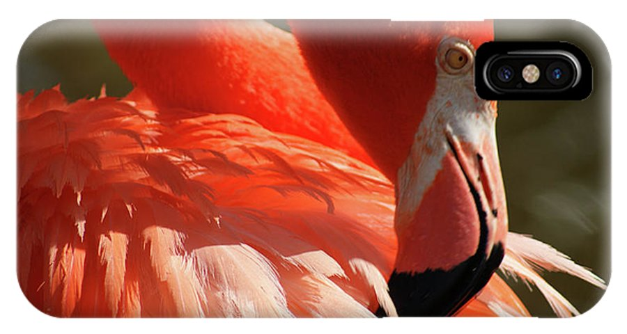 Flamingo IPhone X Case featuring the photograph Grooming by Cathi Abbiss Crane