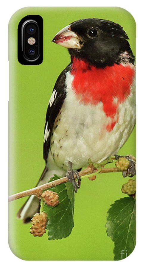 Autumn IPhone X Case featuring the photograph Grosbeak With Mulberry-Stained Beak by Max Allen