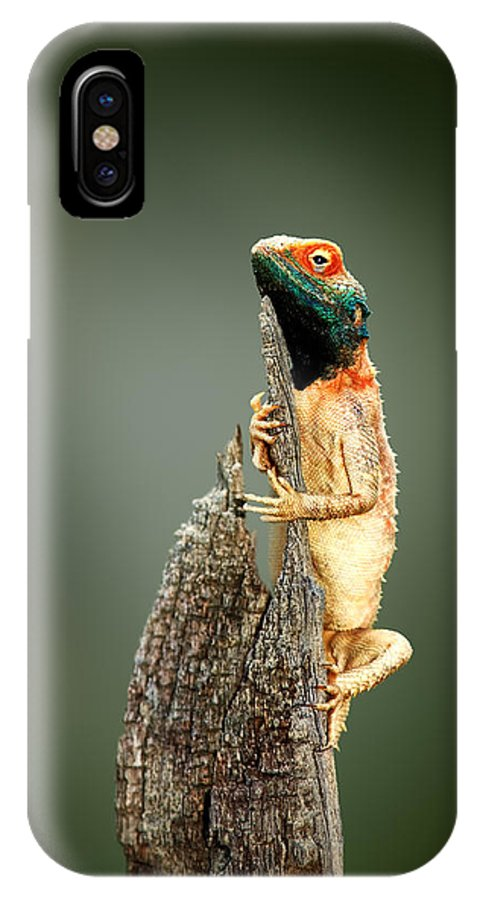 Agama IPhone X Case featuring the photograph Ground Agama Sunbathing by Johan Swanepoel