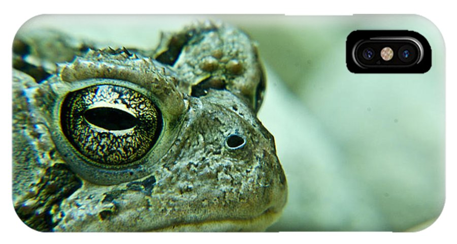 Toad IPhone X Case featuring the photograph Grumpy Toad by Douglas Barnett