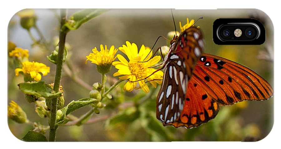 Gulf Fritillary IPhone X Case featuring the photograph Gulf Fritillary Agraulis Vanillae Red Butterfly by Dustin K Ryan