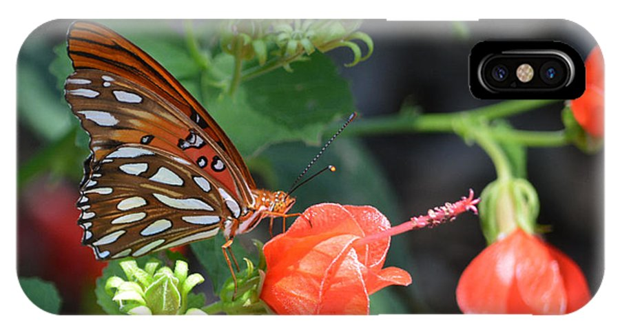 Gulf Fritillary Butterfly On Beautiful Flowers Prints IPhone X Case featuring the photograph Gulf Fritillary Butterfly On Beautiful Flowers by Ruth Housley