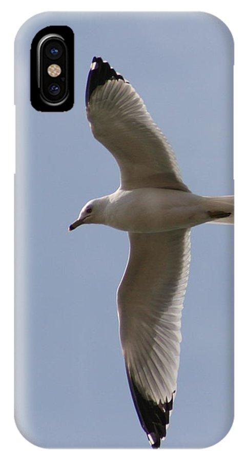 Bird IPhone Case featuring the photograph Gull 1 by David Dunham