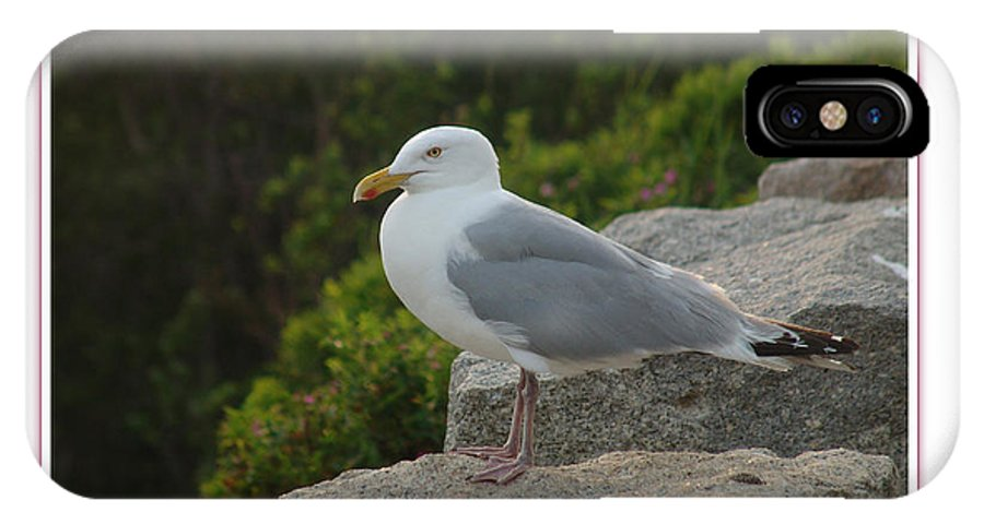 Landscape IPhone X Case featuring the photograph Gull Able by Peter Muzyka