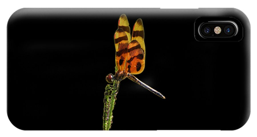 Dragonfly IPhone X / XS Case featuring the photograph Halloween Pennant Dragonfly .png by Al Powell Photography USA