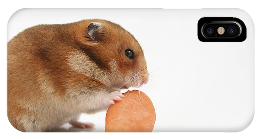 Hamster IPhone X Case featuring the photograph Hamster Eating A Carrot by Yedidya yos mizrachi