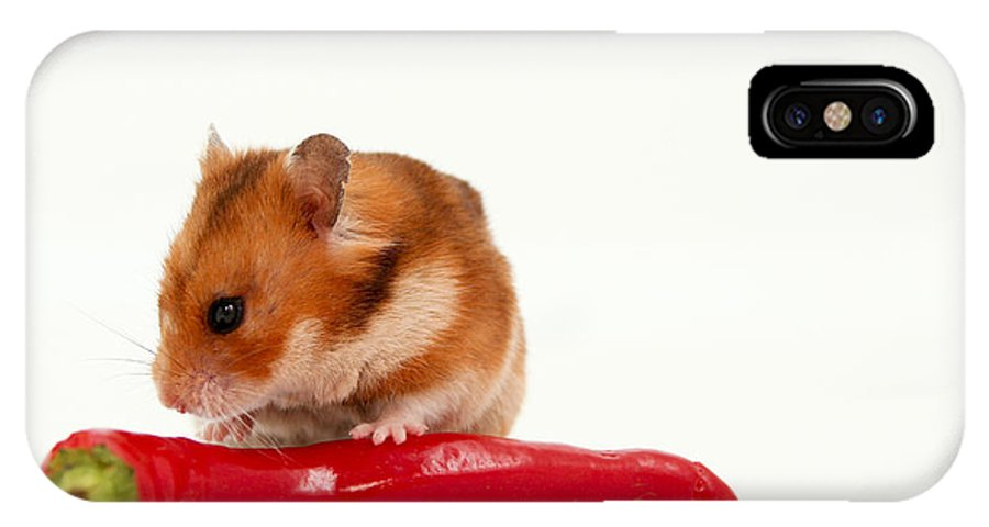 Hamster IPhone X Case featuring the photograph Hamster Eating A Red Hot Pepper by Yedidya yos mizrachi