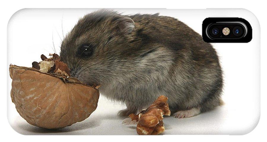 Hamster IPhone X Case featuring the photograph Hamster Eating A Walnut by Yedidya yos mizrachi