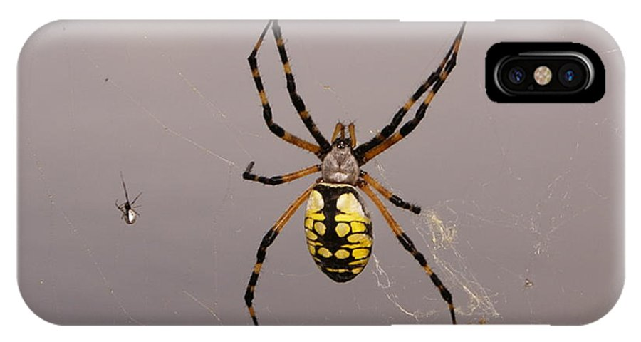 Spiders IPhone X / XS Case featuring the photograph Hanging In There by Debbie May