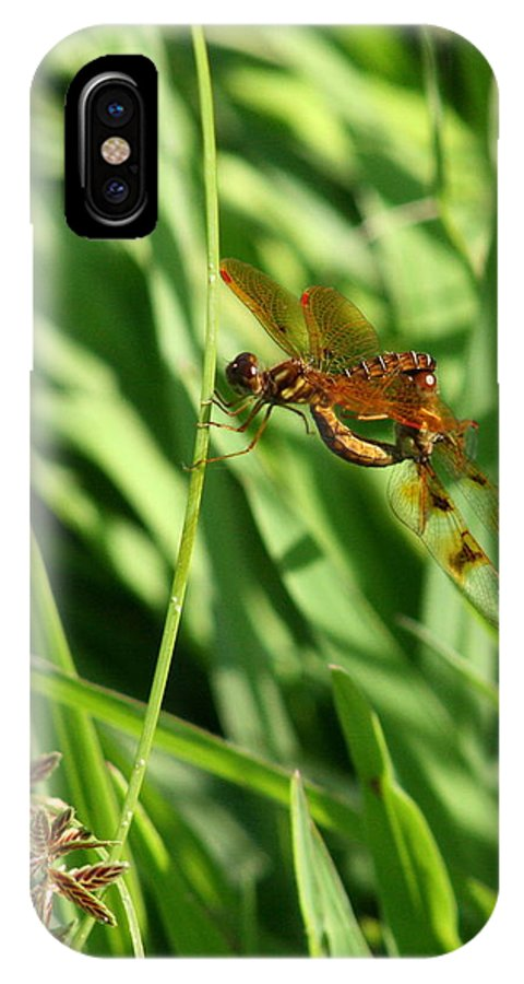 Bug IPhone Case featuring the photograph Hanging On For The Ride by David Dunham