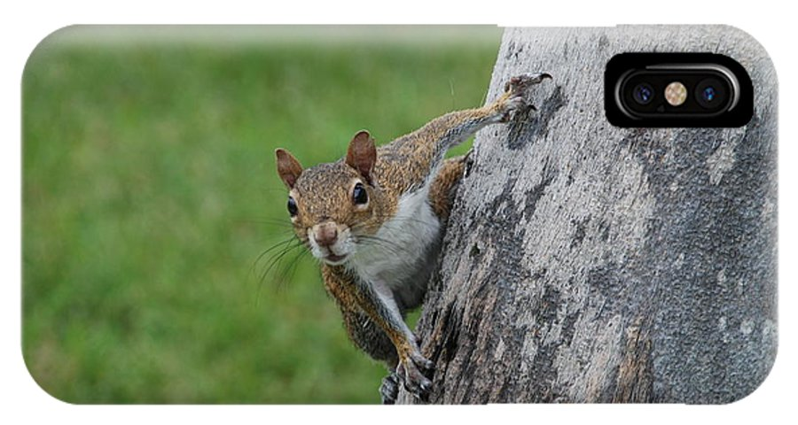 Squirrel IPhone Case featuring the photograph Hanging On by Rob Hans