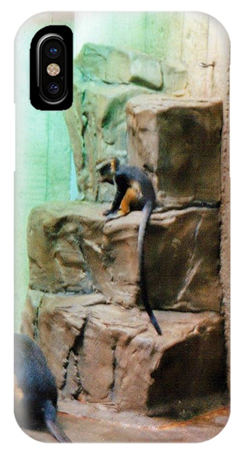 Monkey IPhone Case featuring the photograph Hanging Out by Crystal Webb