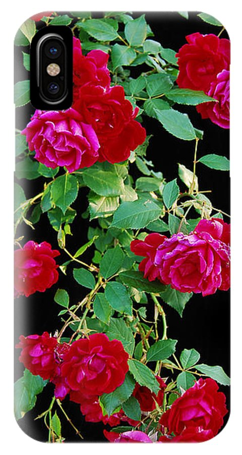 Rose IPhone X Case featuring the photograph Hanging Roses 2593 by Michael Peychich