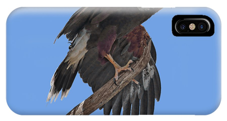 Harris Hawk IPhone X Case featuring the photograph Harris Hawk - Transparent by Nikolyn McDonald