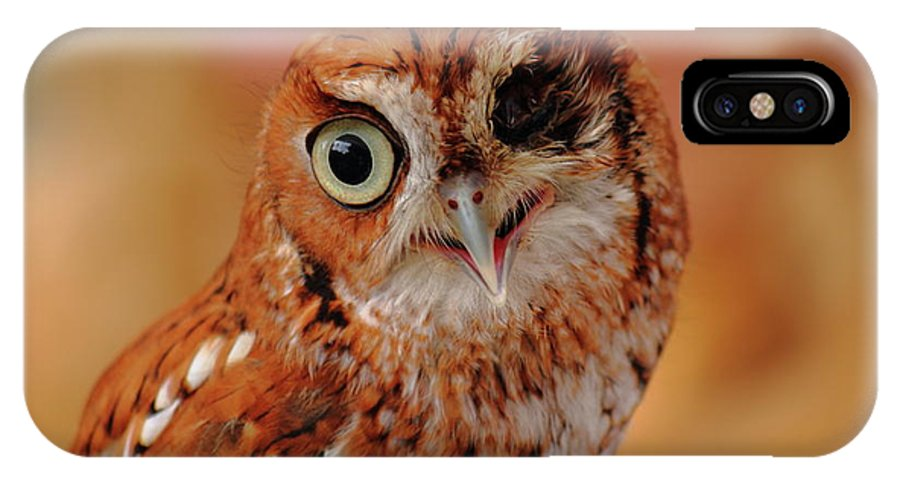 Owl IPhone X Case featuring the photograph Harsh by Jamie Smith