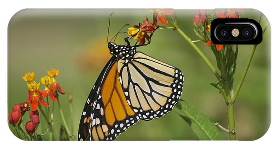 Wildlife IPhone X Case featuring the photograph Hawaiian Monarch 2 by Michael Peychich