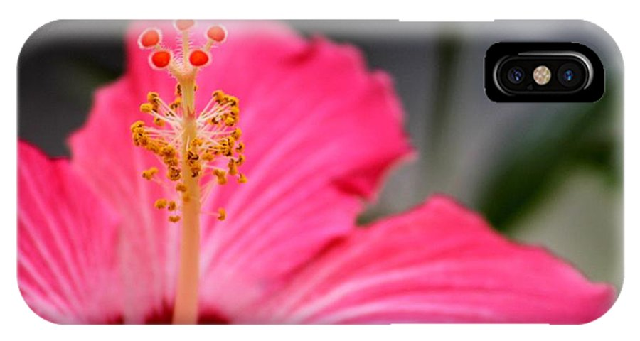 Tropical IPhone X Case featuring the photograph Hibiscus by Amber Sims